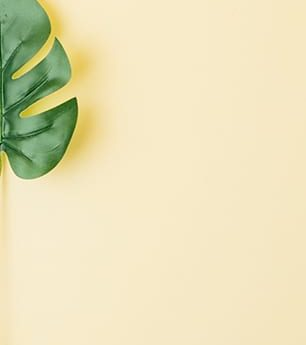 green leaf yellow background handfy terms and conditions الشروط و الأحكام هاندفاي